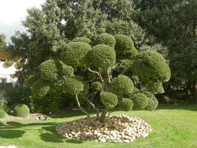 Le Lavandin Garden
